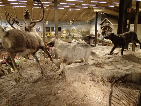 4/12/12 - The pack of wolves and herd of caribou in Bass Pro, Calgary