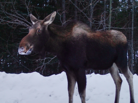 12/12/12 - Just me and a moose